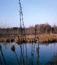 The U.S. Corps' decisions on whether wetlands such as this one are subject to federal jurisdiction are not immediately reviewable in court, says Minnesota federal court.