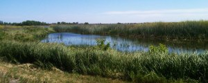 "The proposed rule establishes ""default"" categories of waters that are automatically subject to the Clean Water Act (Source: www.epa.gov/region9/mediacenter/wetlands)"